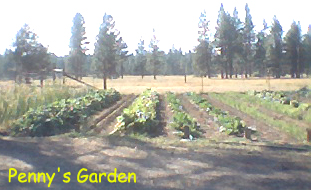 High Desert Gardening Surviving the Middle Class Crash