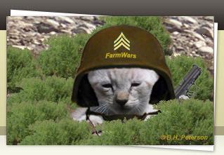 Combat Kitty