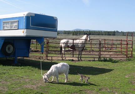 Redneck yard equipment